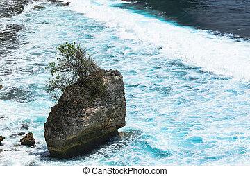 bleu, énorme, lavage, arbre, il, océan, indien, rocher, croissant, paysage