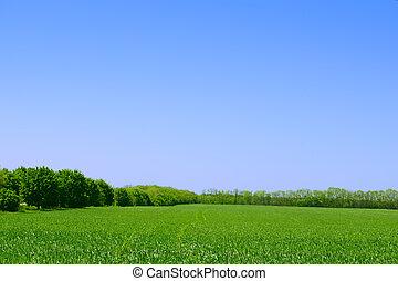 bleu, été, champ, sky., forêt verte, fond, paysage