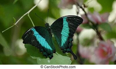 bleu, été, coup, haut, moth-butterfly, merveilleux, forêt noire, bas