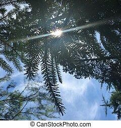 bleu, arbre, ciel, contre