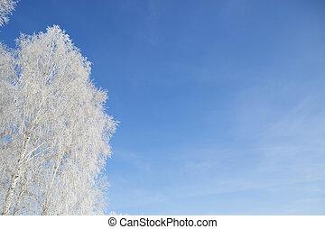 bleu, arbre, ciel, neige, contre, branche