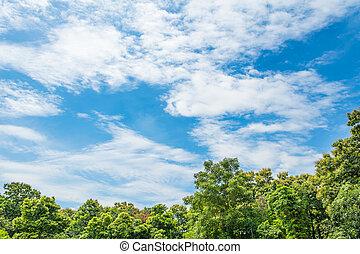bleu arbre ciel paysage - Arbre Ciel