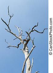 bleu, arbre, feuilles, sans, ciel