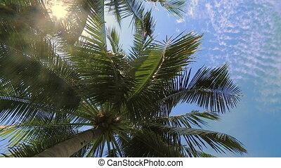 bleu, arbre, noix coco, ciel, sous