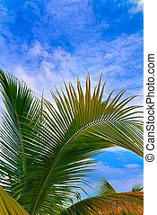 bleu, arbre, paume, ciel, fond