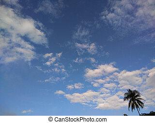 bleu, arbre, paume, nuage ciel