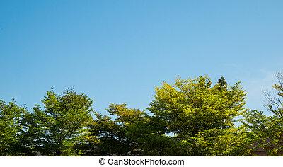 bleu, arrière-plan., arbre, ciel