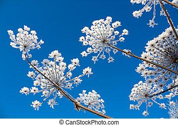 bleu, arrière-plan., fleurs, ciel, neigeux