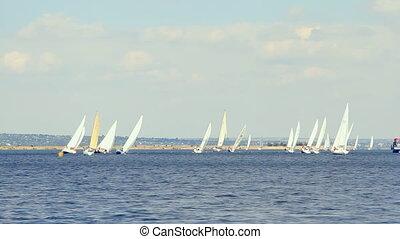 bleu, bateaux, s, mer, voile