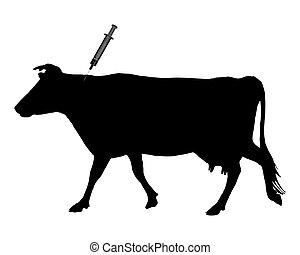 bleu, because, vache, maladie, langue, obtient, inoculation