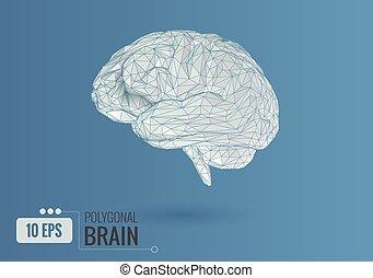 bleu, bg, poly, cerveau, illustration, blanc, vue, côté, bas