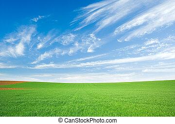 bleu, blé, champ ciel, vert, cirrus