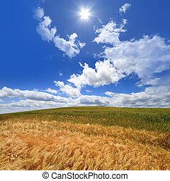 bleu, blé, ciel, contre, champ, profond