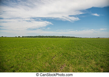 bleu, blé, field., sky.