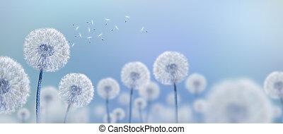 bleu, blanc, pissenlits, fond