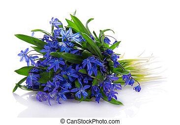 bleu, bouquet, fleurs, printemps