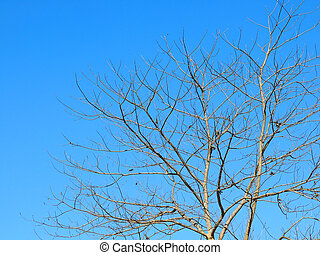 bleu, branches, arbre, feuilles, ciel, contre, sans