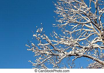 bleu, branches, neigeux, arbre, ciel, contre