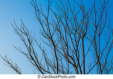 bleu, branches, sky., feuilles, arbre, contre, sans