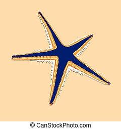 bleu, brun, etoile mer, contur, fond, orange
