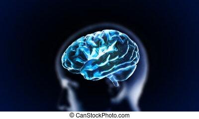 bleu, cerveau, tête