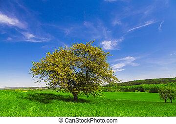 bleu, champ, arbre, ciel