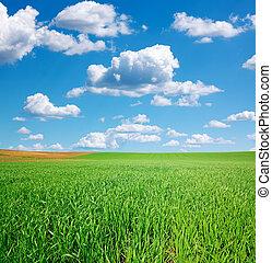 bleu, champ blé, ciel, cumulus, vert