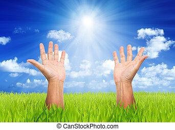 bleu, champ, soleil, ciel, faisceau, arrière-plan vert, mains, homme