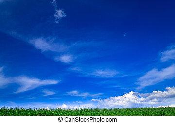 bleu, champs, printemps, -, paysage vert, ciel