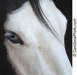 bleu, cheval, observé