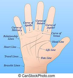 bleu, chiromancie, main droite