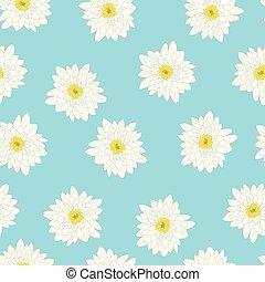 bleu, chrysanthème, fond blanc