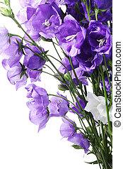 bleu, cloche, bouquet, frais, fleurs blanches