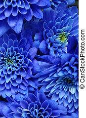bleu, coeur, fleur, aster, haut, jaune, pétales, texture, fond, fin, :, ou