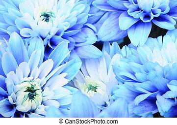 bleu, coeur, fleur, pistils, aster, haut, pétales, texture, ...
