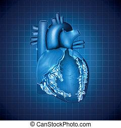 bleu, coeur, illustration, monde médical, conception, humain, résumé