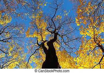 bleu, coloré, ciel, arbres, automne, contre