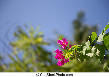 bleu, coloré, ciel, feuilles, arbre, vert, fleurs