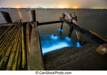 bleu, couleur, projection, luniminescence, fleur, algues