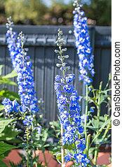 bleu, croissant, fleurs, jardin