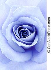 bleu, doux, rose