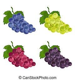 bleu, ensemble, couleur, icons., pourpre, raisins, vert