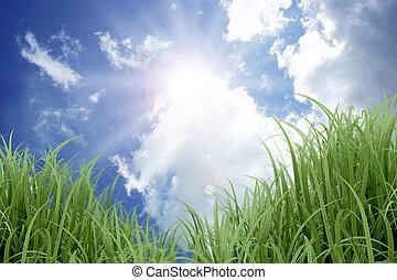 bleu, ensoleillé, herbe, ciel