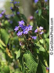 bleu, extérieur, jardin, feuilles, closeup, fleurs