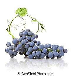 bleu, feuille, isolé, raisin vert, blanc