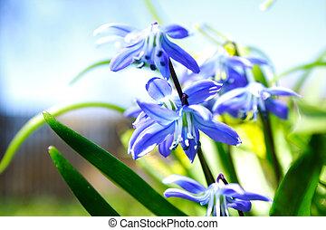 bleu, fin, fleurs, vue