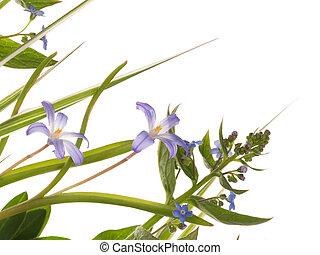 bleu fleurit, délicat