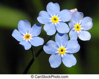 bleu fleurit