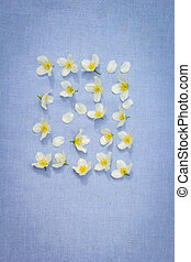 bleu, fleurs blanches, fond