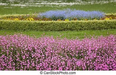 bleu, fleurs pourpres, terrestre